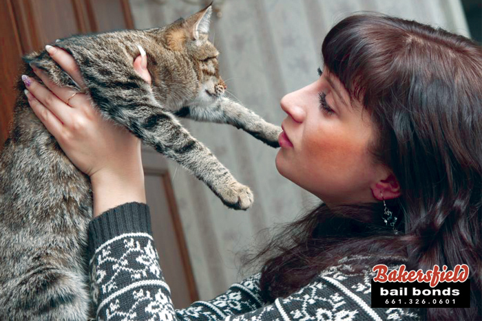 Is Your Friend A Cat Or Dog Person?