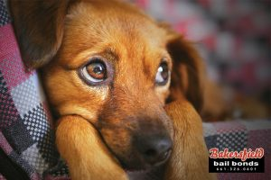 How Much Do You Know About Dog Owner Liability?