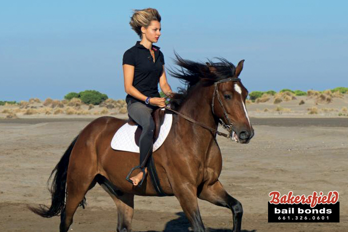 Horseback Riding Laws: Even Horses Have Laws