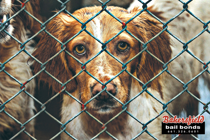 Animal Rescue Scam